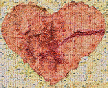 Hearts of Hospice Logo